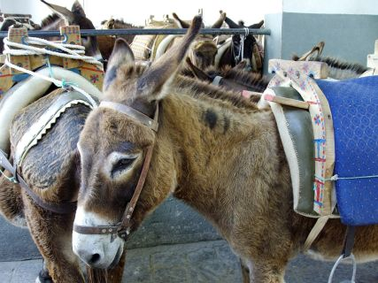 Donkeys in Lindos, Taxi Lindos